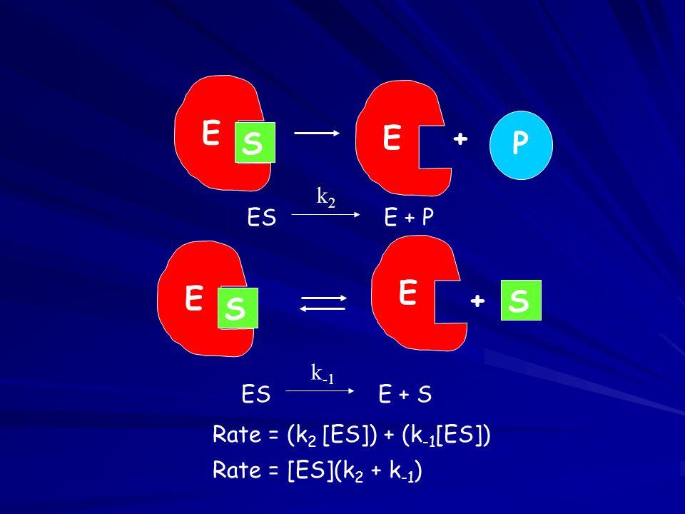 E S + P E S + k2 ES E + P k-1 ES E + S Rate = (k2 [ES]) + (k-1[ES])